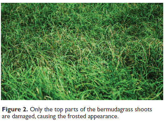 how to grow and harvest coastal bermuda hay