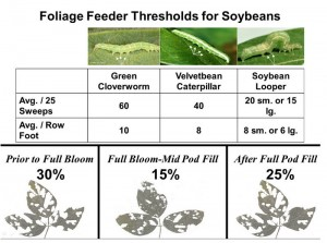 httpthomascountyag.files.wordpress.com201308foliage-feeder-thresholds-soybeans.jpg - Windows Internet Explorer 952013 113539 AM