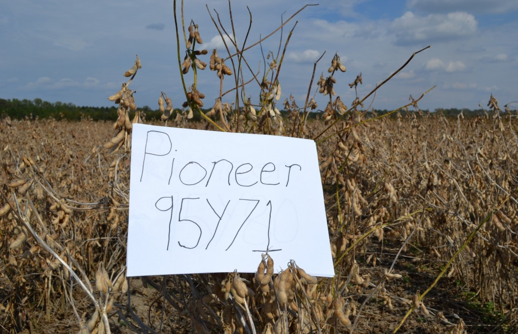 how to grow high yield soybeans