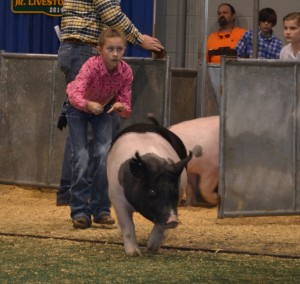 Macy Hataway showing her pig at the Junior National Hog Show