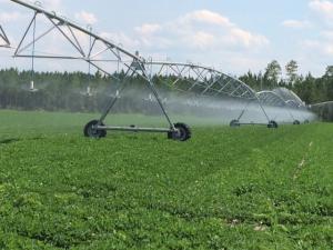 peanutirrigation
