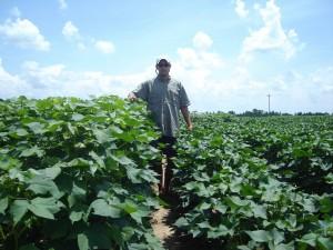 PGR cotton 2
