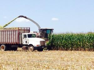 2015 silage harvest