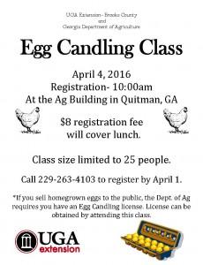 egg candling class flyer
