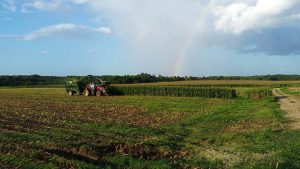 silage rainbow