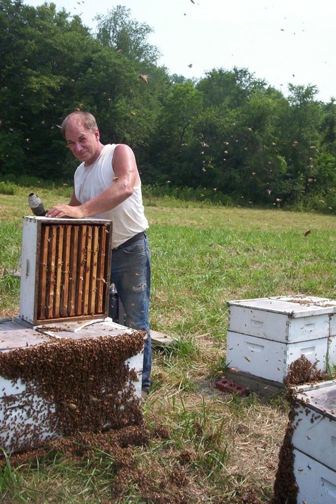 Pulling Honey06