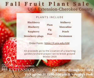 Fruit Gardening: Make plans this fall for sugary success
