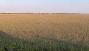 Tybee Island salt marsh.  Source: http://commons.wikimedia.org/wiki/File:Tybee-island-lazaretto-ga1.jpg