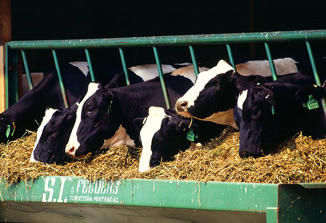 California Dairy Farmers are Saving Money—and Cutting Methane Emissions
