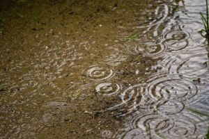 rain-in-puddle-1059687-m free images