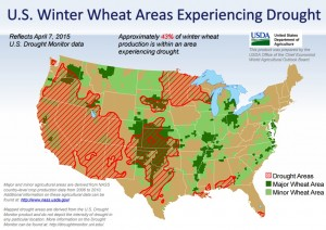 winter wheat in drought 4-15