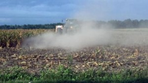 A South Carolina farmer chops down his corn after his yield was declared too low to be worth harvesting. Source: David DeWitt / Clemson University via Southeast Farm Press