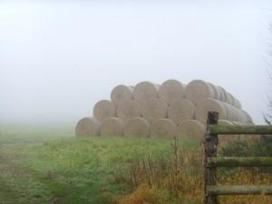 Foggy_hay_bales_-_geograph.org.uk_-_603115