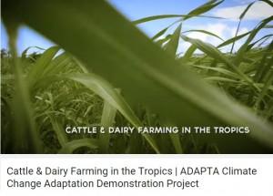 dairy in tropics