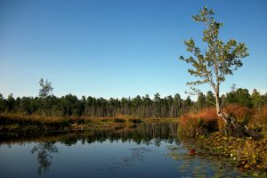Mullica River, Pinelands National Preserve, New Jersey.  Photo © Brian W. Schaller / License: CC BY-NC-SA 3.0