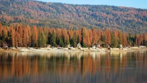 Upcoming webinar: Drought and Urban Forests
