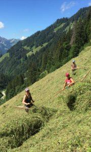 wild-hay-switzerland