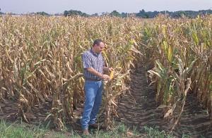 corn harvest ars usda k10026-1