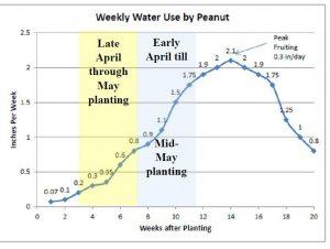 peanut irrigation