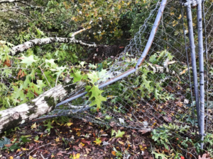 Assessing storm-damaged trees