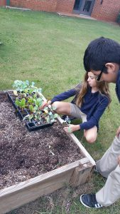 Burney Harris Lyons Middle School: planting