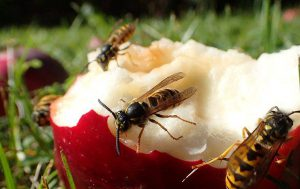 As Weather Cools, Prepare for Fall Insects