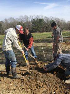 Pecan Trials Planted at Vidalia Onion and Vegetable Research Center