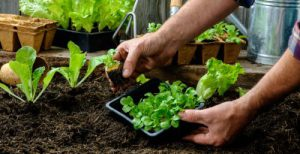 Sow the seeds for a bountiful garden