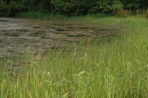 Pond Weed Management