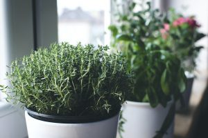 Make Thyme for Herbs in your Garden