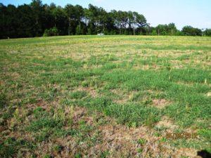 Bermudagrass Pasture Decline