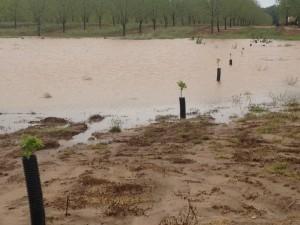 flooded 086