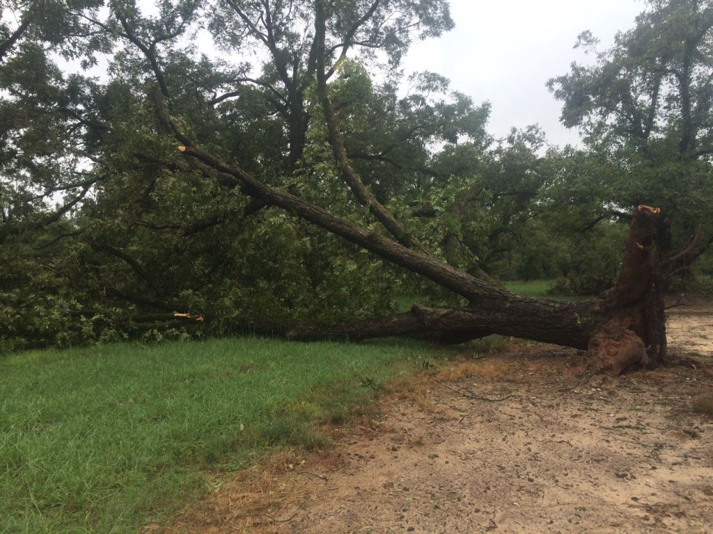 UGA Pecan Extension | Effect of Hurricane/Tropical Storm Irma on