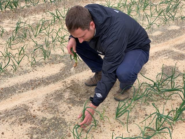 Vidalia Onion Extension Blog   Crop Update – March 6, 2019