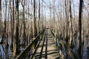 Boardwalk over water at Little Ocmulgee State Park