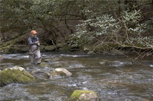 Man fishing for trout in stream
