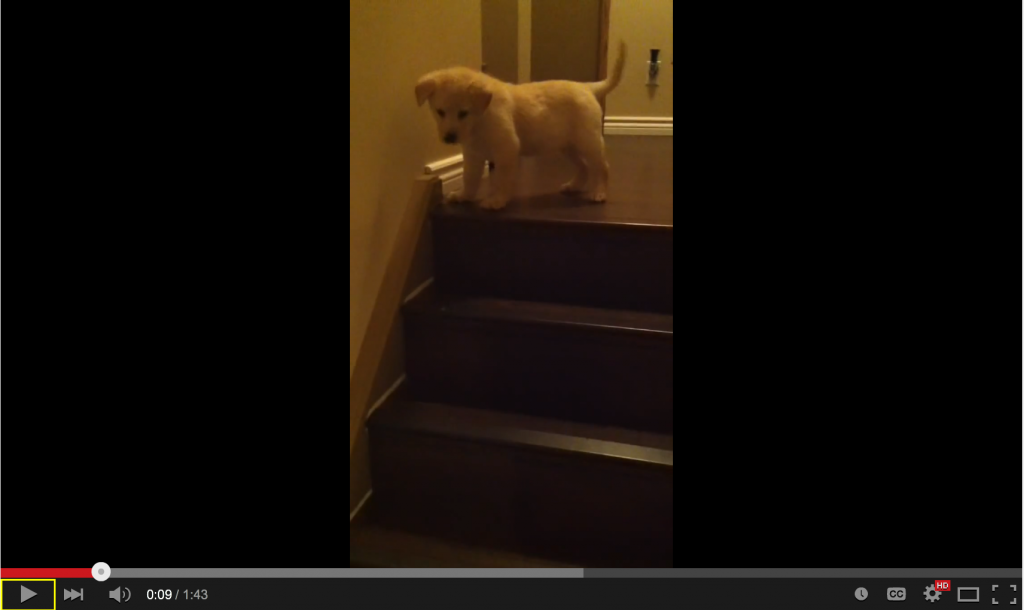 Take The Stairs Puppy!