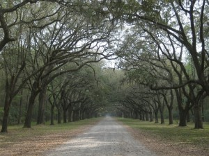 1280px-Live_oaks_at_Wormsloe
