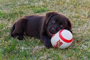 Dog with CocaCola ball