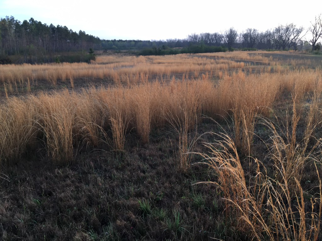 Controlling Broomsedge Wilcox County Ag